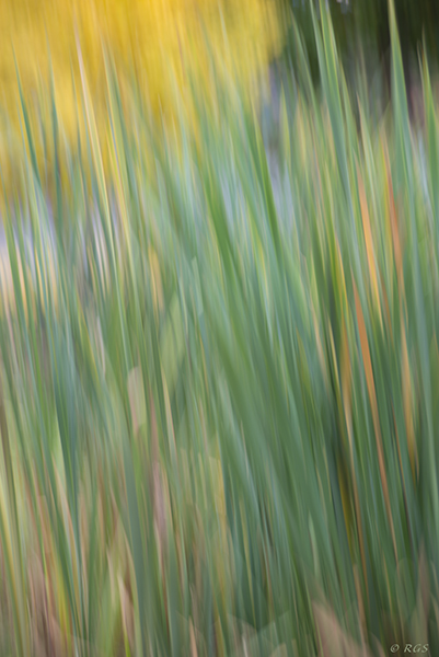 abstract of grass and yellow tree