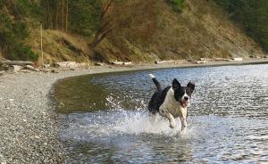 Sam runs through the water