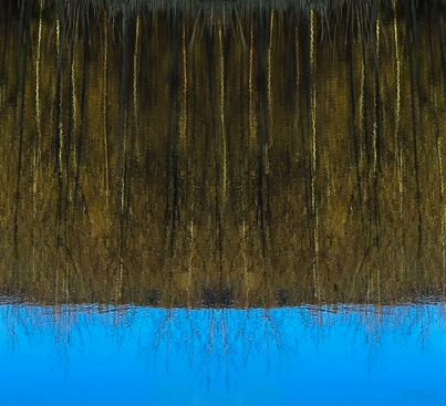 Woods reflected in calm blue water