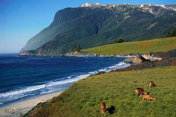 FADE CA coast w deer