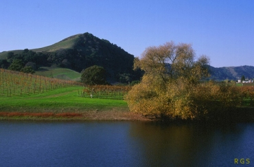 Pond with vineyards