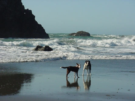Sam stands with puppy friend on Oregon beach