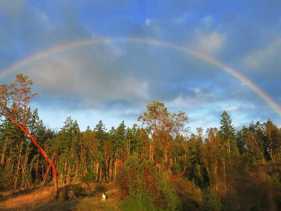 sam under rainbow
