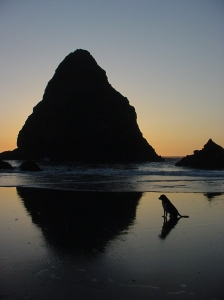 Sam silhouetted by setting sun on Oregon beach