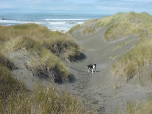 Sam stands in the sand dunes on southern Oregon beach