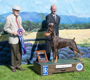 Doberman, winner Best in Show
