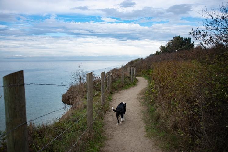Sam walks a path along a bluff at the ocean